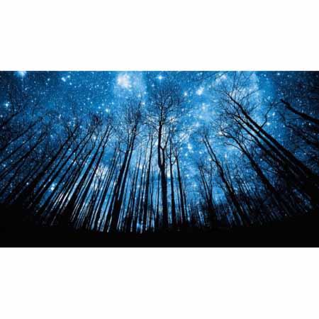 Алмазная вышивка (живопись) Ночной лес