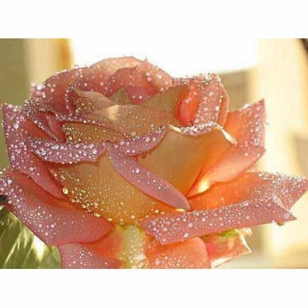 Алмазная вышивка (живопись) Роза 4030