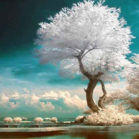 Алмазная вышивка Белое дерево