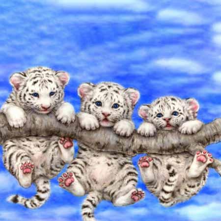 Алмазная вышивка Тигрята