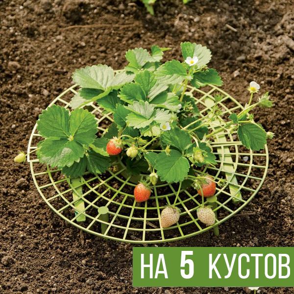 Опора для выращивания клубники на 5 кустов