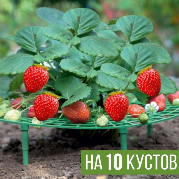 Опора для выращивания клубники на 10 кустов