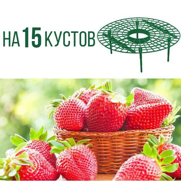 Опора для выращивания клубники на 15 кустов