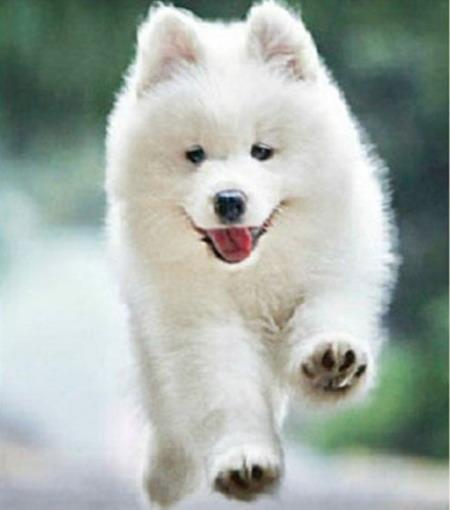Алмазная вышивка Собака