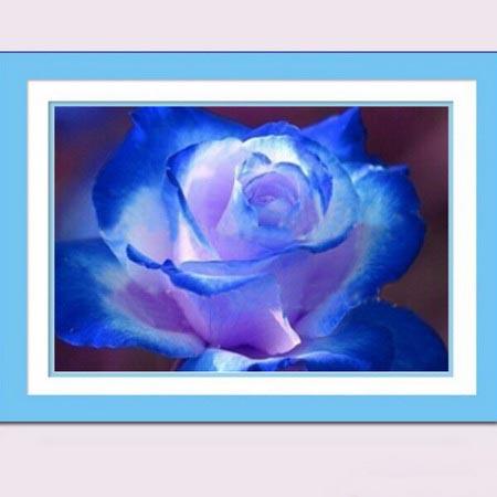 Алмазная вышивка (живопись) Цветок